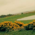 SCotland gorse nature