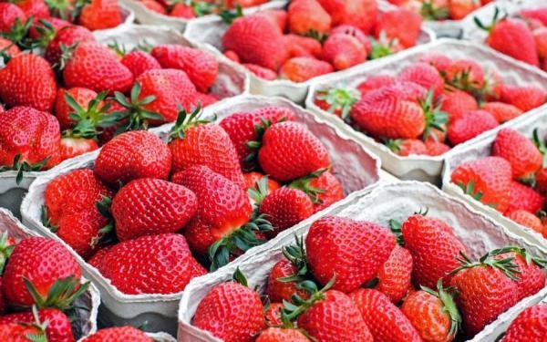 Strawberries Food culture euorpe