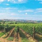 Weintour-italien