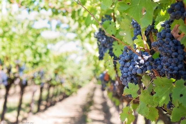 Wein Italien Reise