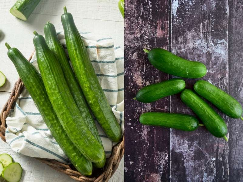 Cucumbers-short and long