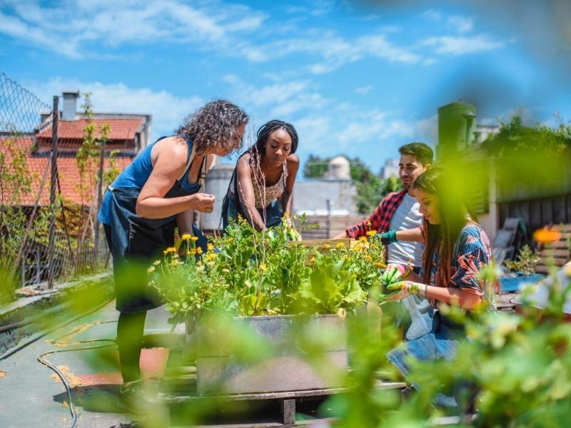 Urban-gardening-überblick